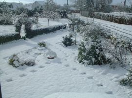 front garden after snow